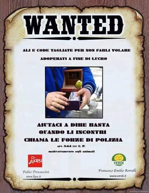 wanted campagna antiviolenza su animali