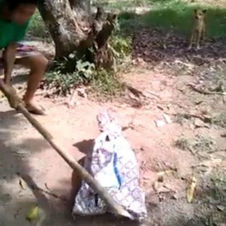 violenza-sugli-animali