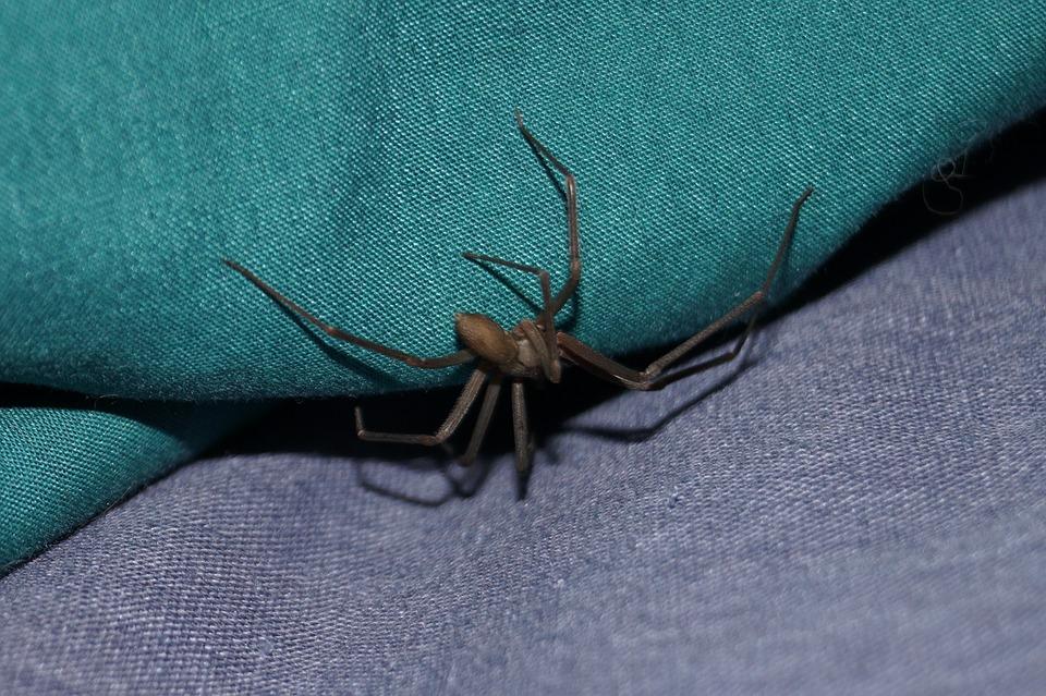 Ragni velenosi in Italia, cosa sapere?