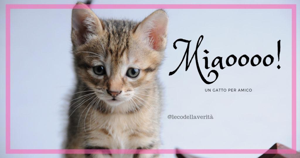 Il gatto tenero compagno, protegge da allergie e ictus