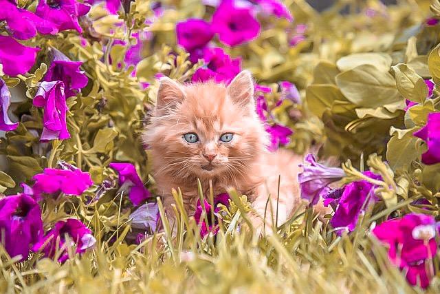 gatti piccoli animali