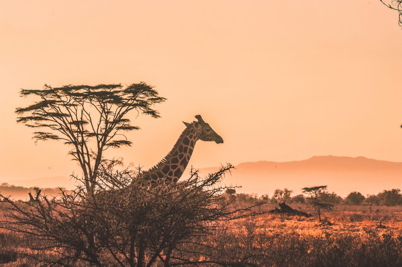 Come vestirsi in Africa? Ecco 5 outfit perfetti