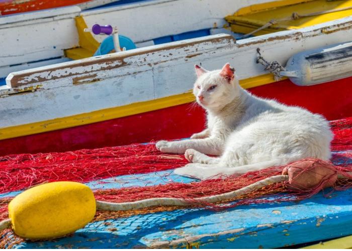 gatti di procida
